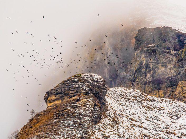 Uno Stormo investe di effimero movimento l'aria  sopra gli ultimi pascoli alpestri, tra la nascita delle ripide pareti che ancora timidamente resistono all'azione dell'uomo e l'incontrastato avanzare dei cirri - Alpi apuane.