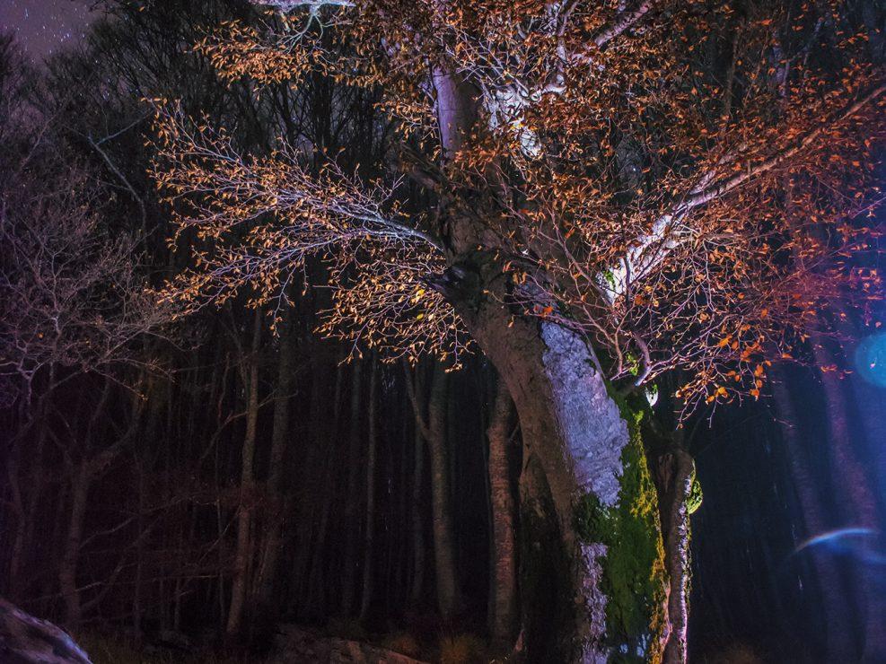 Una volpe rossa si aggira nel buio della notte tra le caduche foglie autunnali e la brezza dei primi freddi portata dal vicino Appennino - Alpi Apuane.