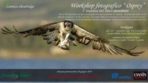 Osprey situ