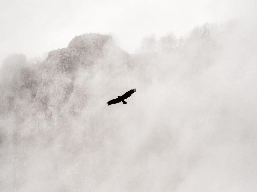 Un Aquila solca i cieli in cerca di una preda - Alpi Apuane.